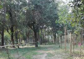 280 katha, Ready  Agriculture/Farm Land for Sale at  Agriculture/Farm Land at