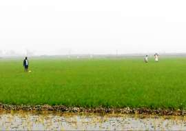 25 katha, Upcoming  Agriculture/Farm Land for Sale at Uttar Khan Agriculture/Farm Land at