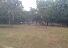 60 katha, Ready  Agriculture/Farm Land for Sale at Gazipur Sadar Agriculture/Farm Land at