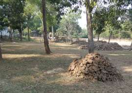 170 katha, Ready  Residential Plot for Sale at Mirzapur Residential Plot at