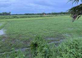 22 katha, Ready  Agriculture  Land for Sale at Laksam Agriculture/Farm Land at